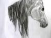 theodora-still-life-horse-190311